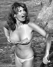 Raquel Welch 8 x 10 GLOSSY Photo Picture IMAGE #10