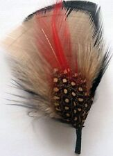 Black Tan Beige & Red - Hat Band Feather Hatband Feathers - Classic Fedora Trim