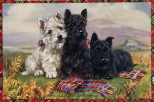 Scottish Terrier Dogs 2 Black 1 Wheaten Mabel Gear LARGE New Blank Note Cards