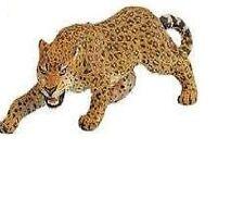 Leopard 11 cm Vecchia Serie di esecuzione gli Animali Selvatici Nord America Safari Ltd 271529a