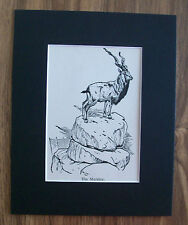 Markhor Goat Print Winifred Austen 1935 Wild Animal Bookplate 8x10 Matted Unique