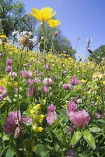 Wild Flower -  Meadow Seed Mix for Clay Soils 4g