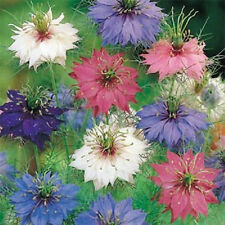 Love in Mist 400 Seeds Beautiful Exotic Multi Colored Flowers