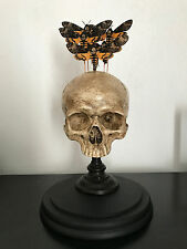 Cabinet de curiosité Globe Crane humain Acherontia atropos papillon téte de mort