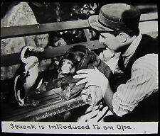 Glass Magic Lantern Slide SQUEAK IS INTRODUCED TO AN APE C1910 PHOTO PENGUIN ZOO
