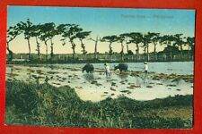 PHILIPPINES PLOWING RICE VINTAGE POSTCARD 611