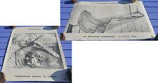 Affiche ancienne scolaire, Les Gaulois, les derniers Carolingiens (drakkar),