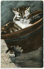 MAGNIFIQUE PETIT CHATON DANS UN CHAPEAU. BEAUTIFUL LITTLE KITTEN IN A HAT.
