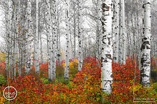 "Aaron Reed ""Echoes Of Fall"" #/100 Fine Art Photographic Print w/COA"