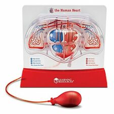 Learning Resources Pumping Heart Model