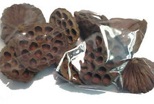 SMALL SIZED DRIED LOTUS POD HEADS, FLORIST,FLORISTRY,CHRISTMAS,SHABBY CHIC,XMAS