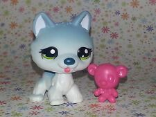 Littlest Pet Shop #1563 white gray Husky puppy dog green eyes tongue ice blue