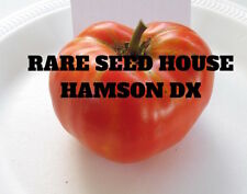 Hamson DX Tomato Seeds!  Comb. S/H See our store for 600 kinds of heirlooms!