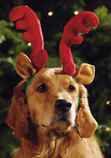 Large Reindeer Head Band, Costume head band, LG, Large Dog Christmas Hat