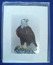 Metal Etched Animal Picture Art Etching of American Bald Eagle. England