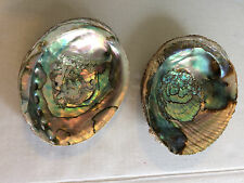 """2 Red Abalone Sea Shell Mother of Pearl Large 6.5"""" Jewelry Decor Nautical Craft"""