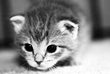 Framed Print - Black & White Kitten (Picture Poster Animal House Pet Cat Bird)
