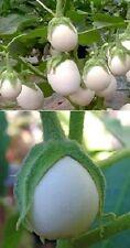 ✿ Eierbaum Solanum als Zimmerpflanze & für den Garten ✿ Obst / Obstbaum ✿ Samen