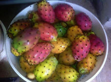 50+ FRESH Prickly pear / Opuntia Ficus Indica seeds Red variety