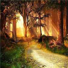 Forest paths 8'x8' CP Backdrop Computer-painted Scenic Background HY-CM-3233