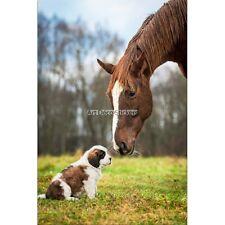 Magnete Da Frigorifero decocrazione Cavallo e cane 60x90cm ref 6248 6248