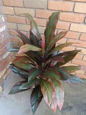 90cm  TROPICIAL ARTIFICIAL  PINK & GREEN CORDYLINE *Silk* Plant* New*Potted