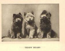 """Chow Chow Pups """"P"""" - 1931 Vintage Dog Print - MATTED"""