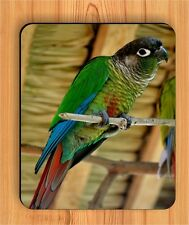 BIRD GREEN CHEEKED CONURE #2 MOUSE PAD gu54ef