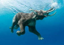 Elephant swimming underwater - 3D Lenticular Postcard Greeting Card - Wildlife