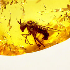 Fly Fossil Insect Inclusion - Natural Baltic Amber Stone 0.15g