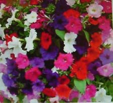 Wave Petunias Mixed Colors-20+Seeds Ohio Grown,$2.00  Max Shipping