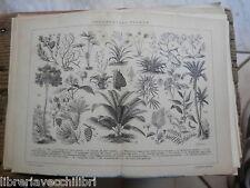 antica stampa da incorniciare INDUSTRIALI PIANTE LINO COTONE CANAPE PAPIRO DI