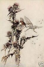 Arthur rackham bee fairy midsummer nights rêve de conte de fées mounted print
