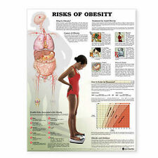 RISKS OF OBESITY POSTER (66x51cm) ANATOMICAL CHART NEW EDUCATIONAL