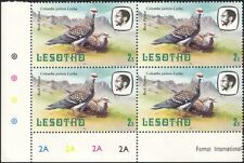 Lesotho 1982 Rock Pigeon/Birds/Nature/Wildlife 4 x 1v c/b (a31)