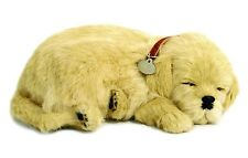 PERFECT PETZZZ GOLDEN RETRIEVER PLUSH PUPPY BREATHING HUGGABLE ANIMAL DOG REAL