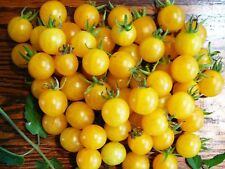 "TOMATO SEEDS ""YELLOW CHERRY CURRANT"" ( 20 SEEDS)"