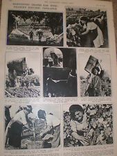 Photo article France the French wine grape harvest 1946 ref Z2