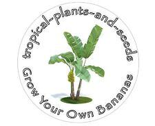 Grow Your Own Edible Bananas - Starter Kit - MUSA ACUMINATA - Gift Box