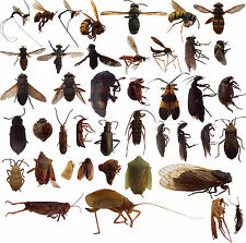 35+ Dead Bugs for Entomology Class Insect Collection! IDENTIFIED! Great Variety!