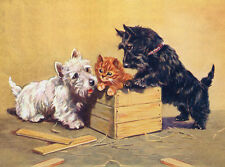 SCOTTISH TERRIER CHARMING WESTIE, KITTEN AND SCOTTIE DOG GREETINGS NOTE CARD