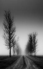 Framed Print - Black and White Dirt Track through a Row of Trees (Picture Art)