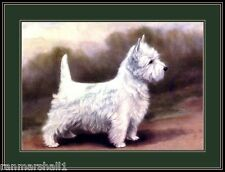 English Print West Highland Terrier Puppy Dog Dogs Art Picture Vintage Poster