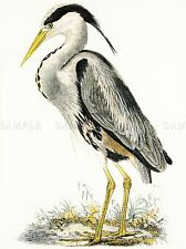 PAINTING BOOK ILLUSTRATION HERON WADER BIRD COOL ORNITHOLOGY POSTER PRINT LV2358