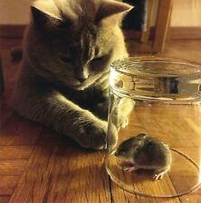 quadratische Postkarte: Wie komme ich da bloß ran? Katze und Maus im Glas