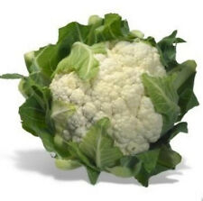 400+ Organic Snowball Cauliflower Seeds ~Delicious Healthy Staple Survival Food