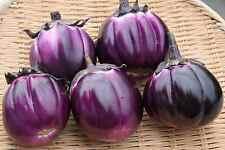 50 Graines de AUBERGINE Violette de Florence / Très Douces