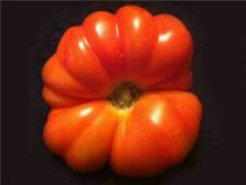 RED GERMAN MAMMOTH HEIRLOOM TOMATO!  20 SEEDS! !