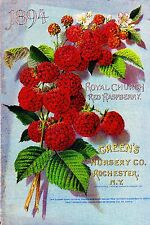 Greens Red Raspberry Vintage Flowers Seed Packet Catalogue Advertisement Poster