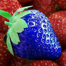100Pcs Organic Strawberry Antioxidant Seeds Unique Blue Strawberry Seeds